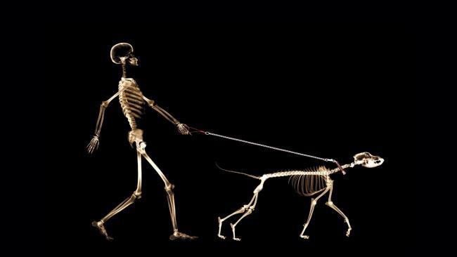 A kutya anatómiája