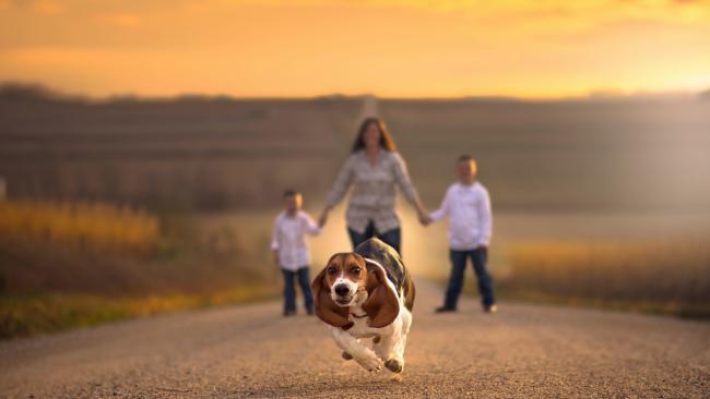 Csípődiszplázia kutyáknál