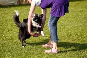 Kutyatánc - Dogdancing