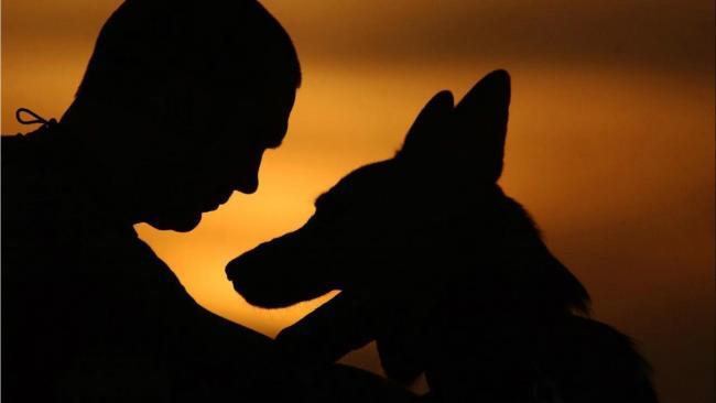 Kutyatartás, a kutya nevelése, a jó életmód program