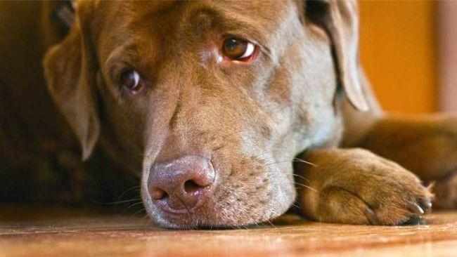 szájüregi rák kutyáknál