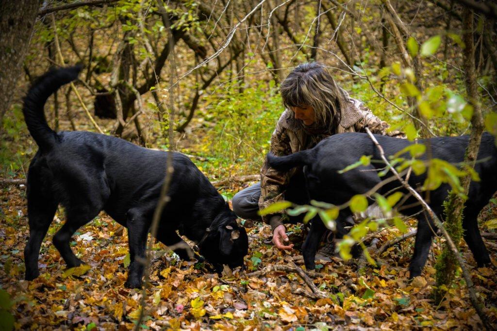 Szarvasgombászat kutyával
